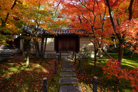yellow trees: Red and yellow fall maple trees along a path to a gated wall in Kyoto, Japan