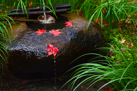 Red autumn maple leaves rest on a tsukubai, or washbasin, at a Japanese temple Stock Photo - 66503064