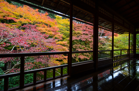 momiji: Maple trees in fall color seen through rustic Japanese windows during autumn Stock Photo