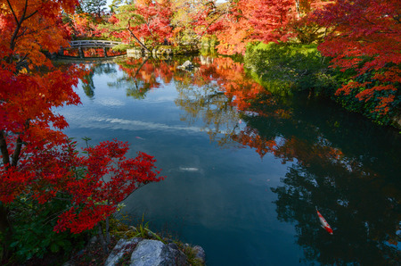 acer palmatum: Peaceful Japanese pond garden in autumn with red maple trees in full fall color Stock Photo