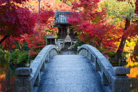 acer palmatum: Bridge to a pond island with a small Japanese prayer shrine and red fall maple trees