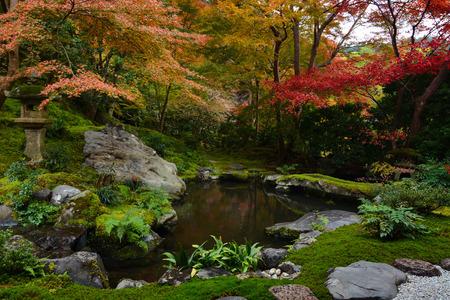 Best Bassin De Jardin Algues Vertes Images - Matkin.info - matkin.info