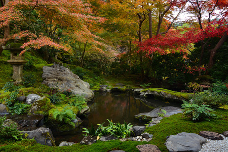 Garden pond in Kyoto, Japan with lush green moss and red fall maple trees Stock Photo