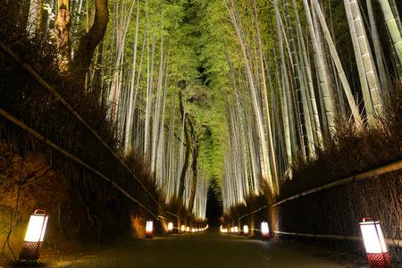 iluminated: Romantic path through bamboo forest iluminated by lanterns during Arashiyama Hanatouro festival in Kyoto