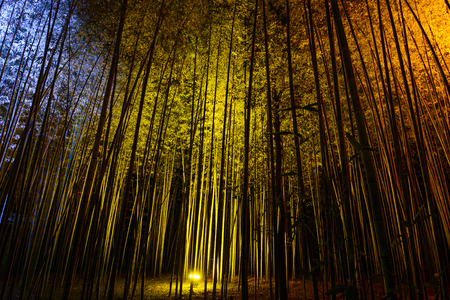 Natural bamboo background illuminated by colorful lights at night during the Arashiyama Lantern festival Stock Photo