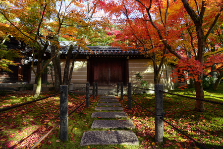 Colorful autumn maple trees shading a path to a traditional Japanese gate in Kyoto