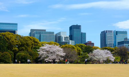 couples outdoors: TOKYO, JAPAN - APRIL 12, 2017 - Couples and families gather in a park in Tokyos Imperial Palace East Gardens to enjoy the outdoors
