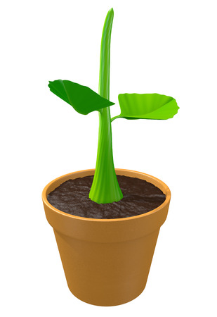 Young green plant sprout in a clay pot, 3D rendering