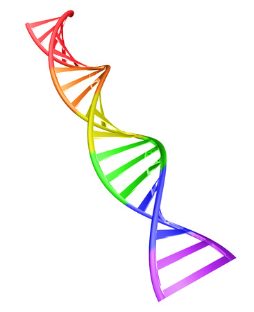Gay gene concept of a spiral shaped double helix DNA strand isolated on a white background, 3D rendering