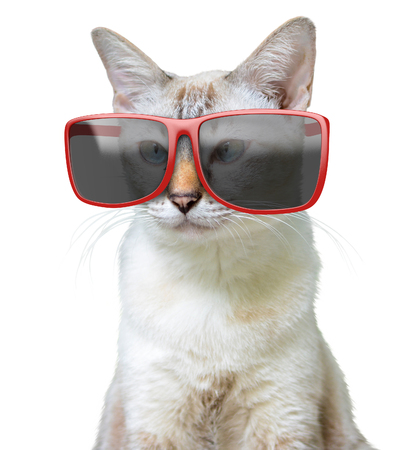 Funny animal portrait of a cool cat wearing big oversized red sunglasses, isolated on a white background