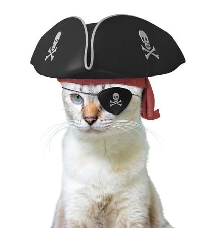 Costume drôle d'animal d'un capitaine de pirate de chat portant un chapeau tricorne et oculaire avec des crânes et des os croisés, isolé sur fond blanc Banque d'images