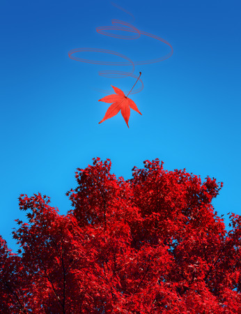 Red Japanese maple against blue sky fall background