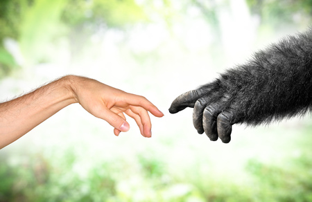 Human and monkey hand evolution from primates concept Stock Photo