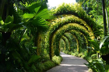 Arcos de flores en el Jardín Nacional de Orquídeas en los Jardines Botánicos de Singapur Editorial