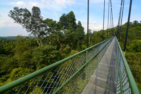 Long suspension bridge treetop walk near MacRitchie Reservoir in Singapore