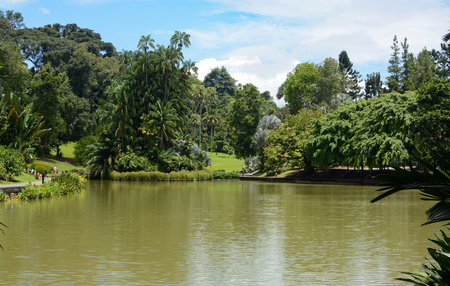 Peaceful scenery around Symphony Lake at Singapore Botanic Gardens