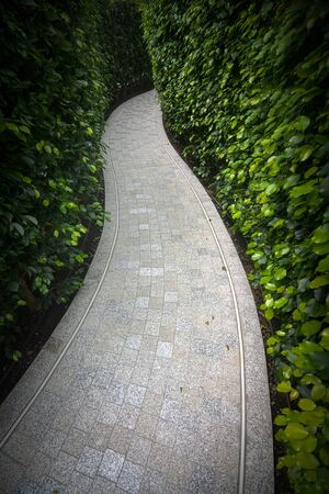 Secret path through a dense garden hedge maze
