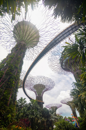 Vertical view of the OCBC Skyway in the Supertree Grove at Gardens by the Bay
