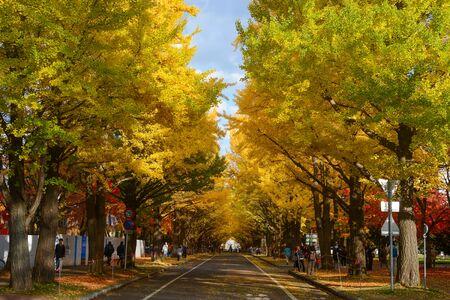 Entrance to Ginkgo Avenue at Hokkaido University in Sapporo during the peak of autumn