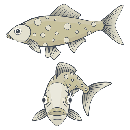 sea side: Set of river or sea fish. Full face and side view of marine animal. Isolated pictures of underwater creature