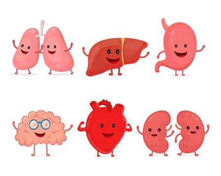 Healthy strong organs set