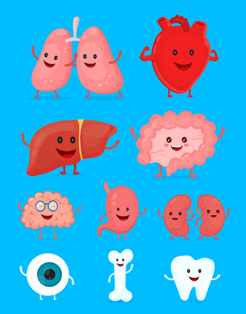 digestive system: Cute happy human healthy strong organs set. Illustration