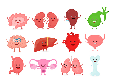 Cute smiling happy human healthy strong organs set. Vettoriali