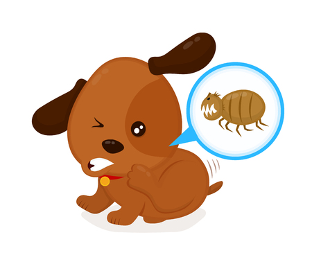 Cute angry itchy dog scratches fleas off. Domestic or stray dog with skin parasites. Pet and fleas.parasite under a microscope.
