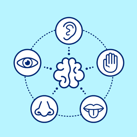 Five human senses surrounding brain. Vision, hearing, smell, touch, taste.Vector flat line illustration icon design.Human nose, eye, hand, ear, mouth senses concept.Human perception infographic scheme