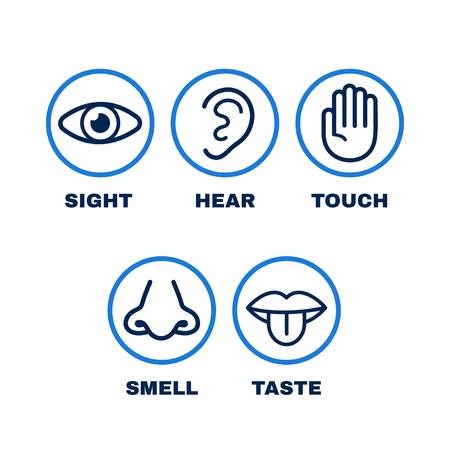 Conjunto de iconos de línea de cinco sentidos humanos. Visión, oído, olfato, tacto, gusto. Vector, línea plana, ilustración, icono, design., Humano, nariz, ojo, mano, oído, boca, sentidos, concepto