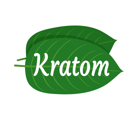 Mitragyna speciosa, kratom leaf logo template. Vector flat illustration icon design. Isolated on white background. Kratom plant drug leaf logo concept