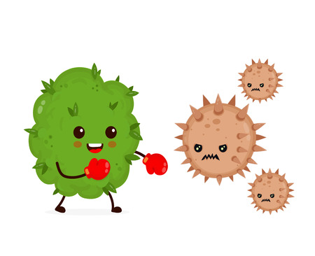 Cute happy funny strong marijuana weed bud in boxing gloves fight with bacteria microorganism cancer virus. Vector flat cartoon character illustration icon design. Health, medical marijuana concept