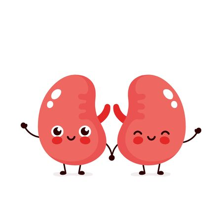 Strong cute healthy happy kidneys character. Vector flat cartoon illustration icon design. Isolated on white background. Couple of healthy human kidney concept Stock Illustratie