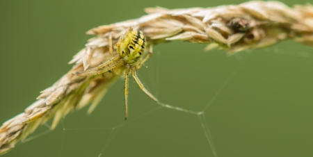 peristalsis: The spider