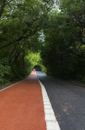 Forest road in lush forest Banco de Imagens