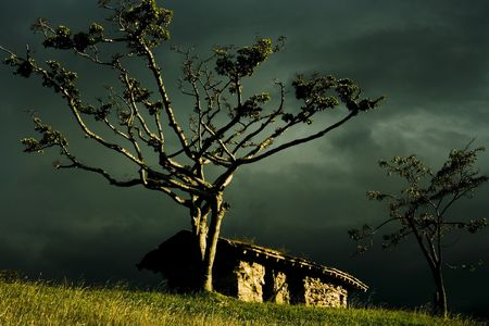 imposing: A small primitive clay hut in a large grassy landsscape with a large imposing tree infront.