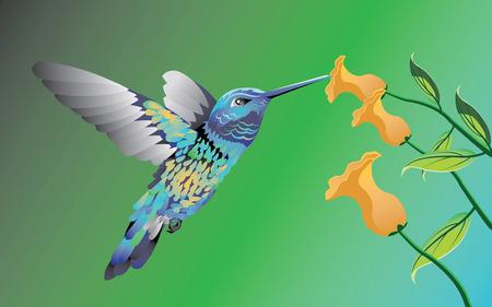 humming: Hummingbird
