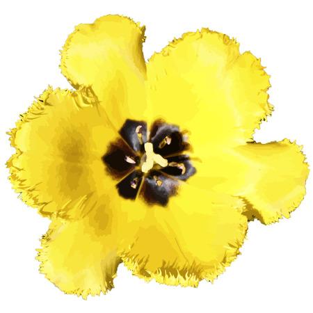 fondo transparente: flor en un fondo transparente Vectores