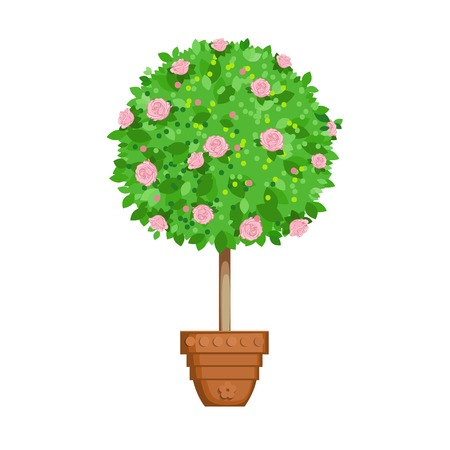 pot plant with flowers and leaves. flowering tree in a pot