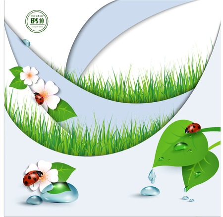 ladybug on leaf: Spring background with flowers, grass and a ladybug. Vector.