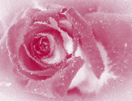 Pink Rose. Halftone effect