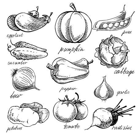 vegetable garden: Set of various doodles, hand drawn rough simple sketches of different kinds of vegetables. Vector.