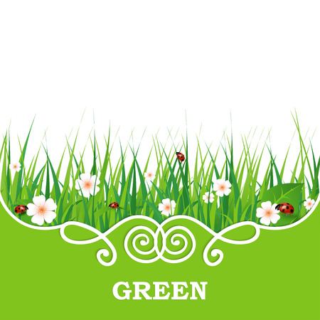 detail: Green grass lawn isolated on white. Floral nature spring background Illustration