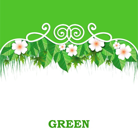 sedge: Spring banner with green grass