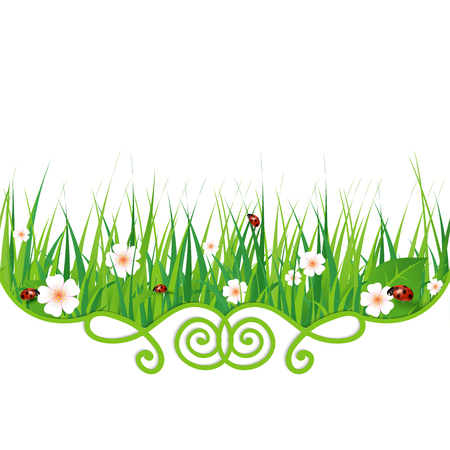 ladybug: vector background with green grass and ladybug Illustration