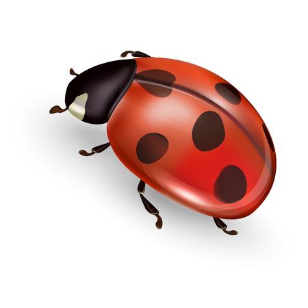 Ladybird vector illustration, ladybug vector icon