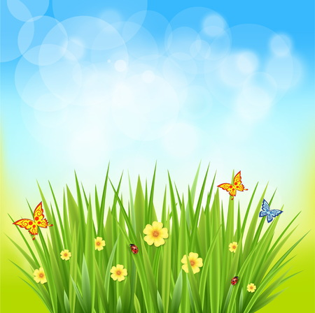 butterfly flower: Nice shiny fresh daisy chamomile butterfly flower grass lawn with bokeh blur effect sunshine beam background. Nature spring summer backgrounds collection. Illustration