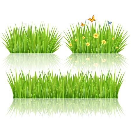 sedge: Grass set, vector
