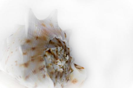 crustacean: Shells of sea crustacean on a gradient gray background