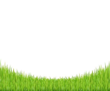 grasslands: Green Grass Border, Vector Illustration